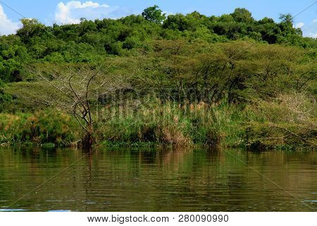 The Dense Forest Greenery Along The Ugandan Nile River In Murchison Falls National Park
