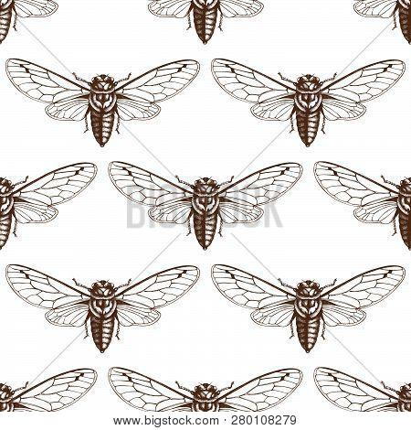Cicada_pattern_1