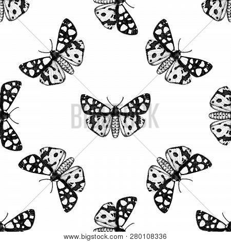 Cream-spot Tiger Moth Pattern