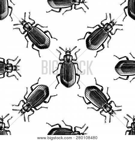 Darkling Beetle Pattern 1