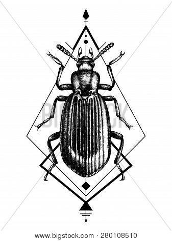 Darkling Beetle Tattoo