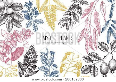 Botanical Background With Beautiful Myrtle Plants Sketches. Hand Drawn Feijoa, Eucalyptus, Tea Tree,