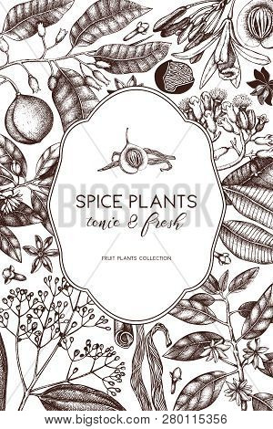 Spice_plants_card_9