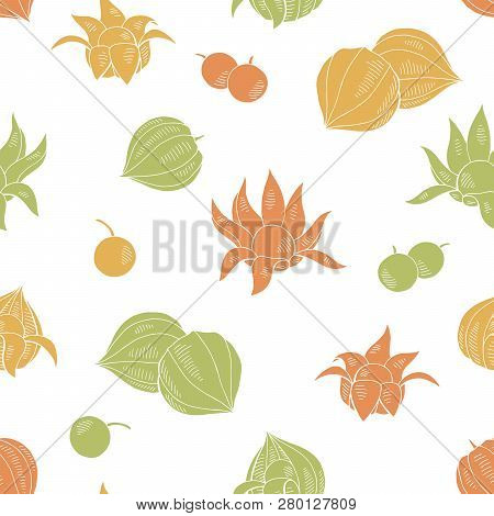 Physalis Fruit Graphic Color Seamless Pattern Sketch Illustration Vector