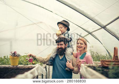 Husbandry With Happy Family. Happy Family Keep Husbandry. Husbandry With Happy Family In Greenhouse.