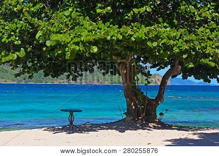 Welcoming Sandy Beach With A Table Under Large Sea Grape Tree, St. Thomas, Usvi. Tropical Island Wit