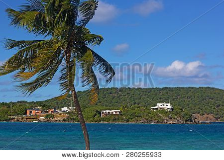 Afternoon Breeze Brought Relief From Heat Into A Small Bay On St. Thomas, Virgin Islands Us. Forest