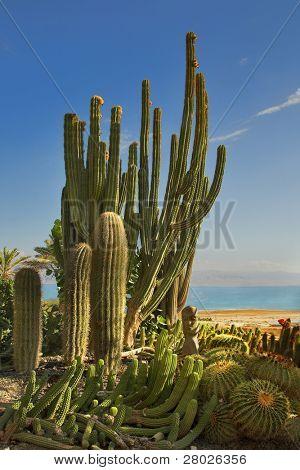 A botanical garden in an oasis on seacoast