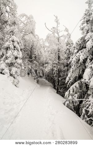 Snow Covered Hiking Trail With Frozen Trees Bellow Lysa Hora Hill In Moravskoslezske Beskydy Mountai