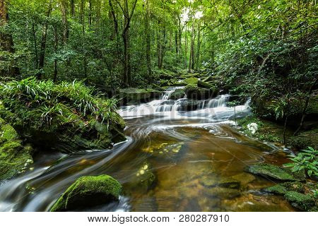 Mountain River Stream Waterfall Green Forest / Landscape Nature Plant Tree Rainforest Jungle Small W