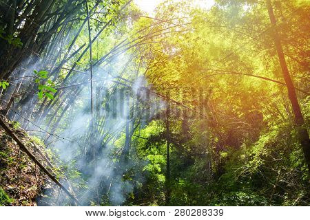 Bamboo Nature Forest / Bamboo Tree With Morning Sunlight And Fog Smoke