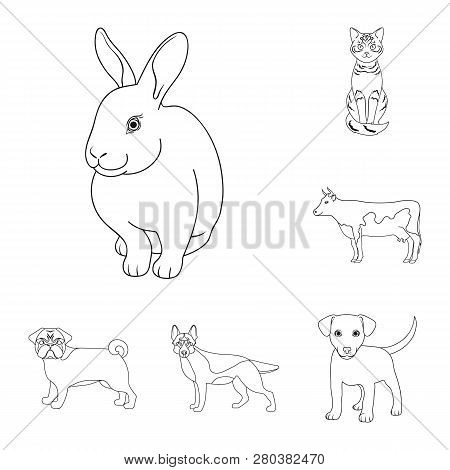 Vector Design Of Animal And Habitat Logo. Collection Of Animal And Farm Vector Icon For Stock.