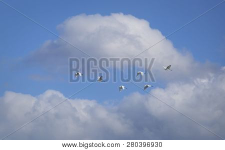 A Flock Of Birds Flying In The Sky Among The Clouds. Herons.