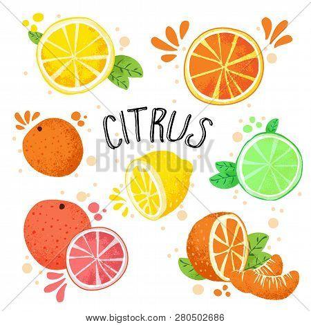 Hand Draw Vector Illustration Of Citrus Fruits. Fresh Ripe Citruses Isolated On White - Lemon, Lime,