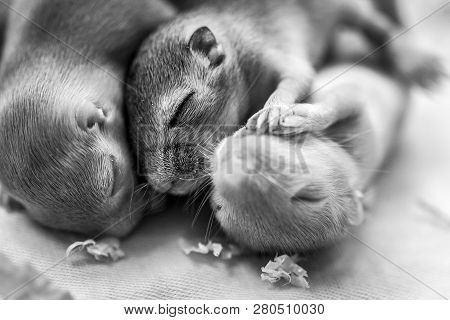 Little cute mice babies sleeping huddled together. Macro image. poster