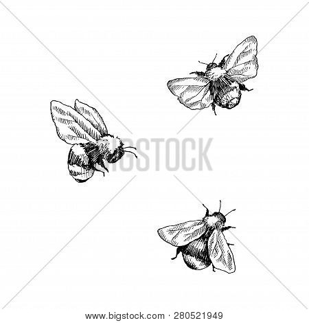 Bumblebee Set. Hand Drawn Vector Illustration. Vector Drawing Of Tree Honeybee. Hand Drawn Insect Sk
