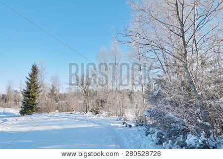 Hoar Frost On Trees In A Sunny Winter Landscape In Finland. Sunlight Shining Through The Cold Weathe