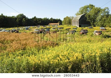 rusty antique cars in a yellow and green field