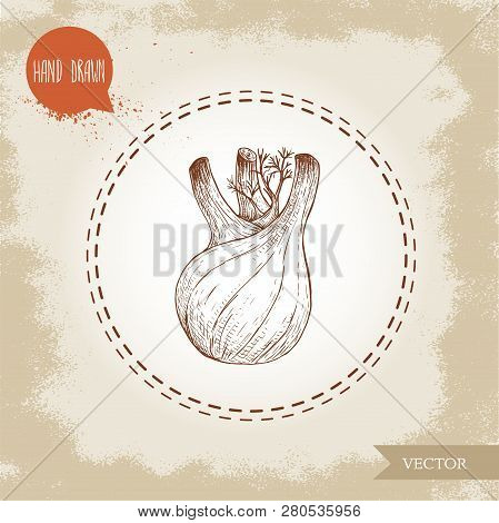 Hand Drawn Sketch Fennel Bulb. Spicy Root Plant With Leaves. Herbs, Spice And Condiment Vector Illus