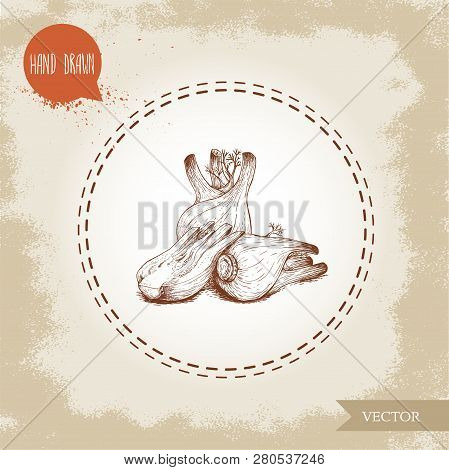 Hand Drawn Sketch Fennel Bulbs Composition. Spicy Root Plant With Leaves. Herbs, Spice And Condiment