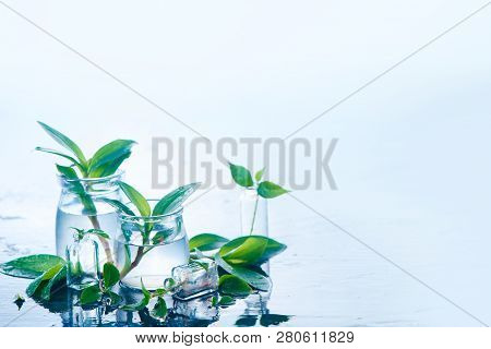 Green plants in glass jars header. Clarity and freshness concept with leaves and water. Light background with copy space poster