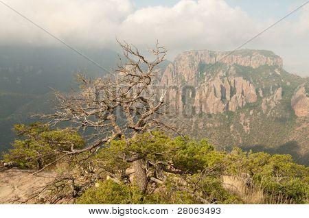Chisos Mountain cliffs and Juniper Canyon