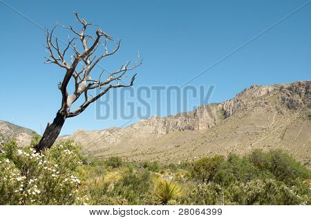 poster of Tejas Canyon and dead tree