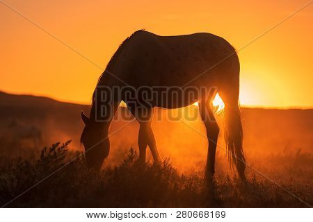 A Wild Horse Silhouetted At Sunset Int He Utah Desert