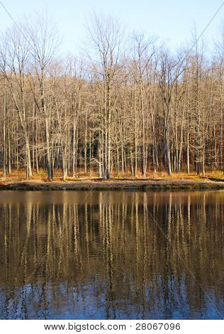 science lake and bare trees