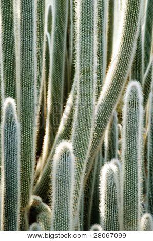 cacti in a botanical garden