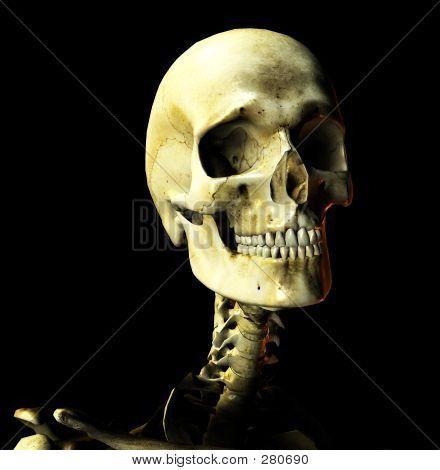 Bone 28