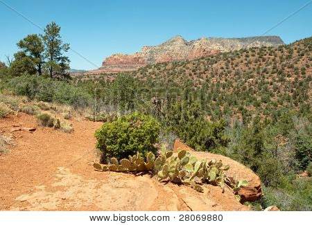 mountains and forests in Sedona, Arizona
