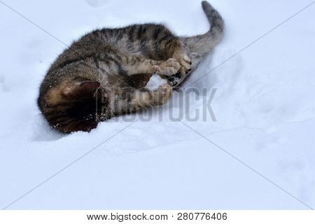 Small kitty cat is playing with snowball in the winter poster
