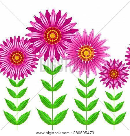 Seamless Vector Of Echinacea Purpurea Flowers. Vector Seamless Illustration Of Group Of Echinacea Pu