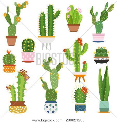 Cactus Pots. Home Plants Cacti Flowers In Ceramic Pot Succulent Plant, Cactuses With Prickles Flora