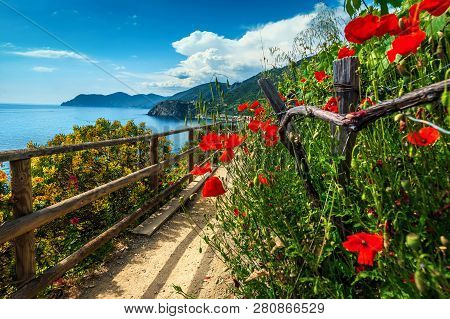 Spectacular Hiking Trails With Flowers And Red Poppies In Cinque Terre National Park, Near Manarola