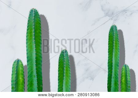 Close Up Green Cactus On White Marble Background.