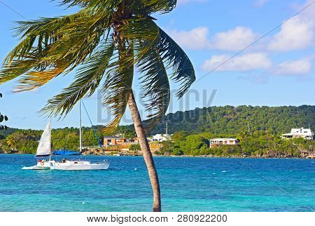 Yachts Moored At St Thomas Island Bay Near A Shore With Standing Palm Tree In Foreground. Beautiful