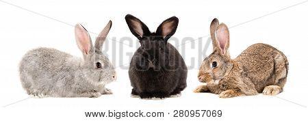 Three Rabbits Sitting Together Isolated On White Background