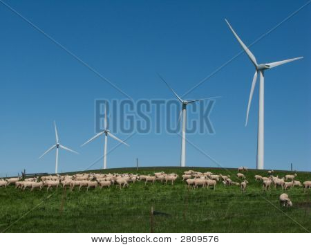 Windmills and goats put out to pasture together. poster