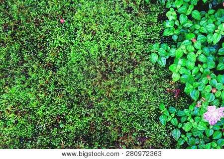 Beautiful Green Moss And Grass Nature Background Texture, Vintage Tone
