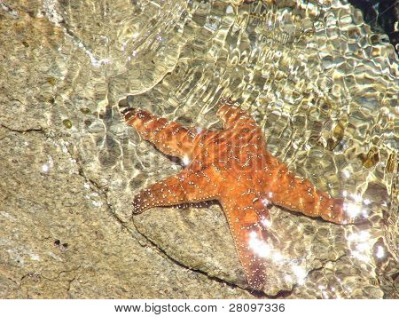 Starfish in Monterey, California