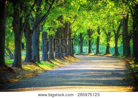 Alley In The Park In Sun Rays. Spring In The Park. A Walking Track. Large Trees And Benches. Walking