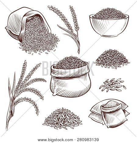 Hand Drawn Rice. Doodle Sack And. Sketch Rice Ears Vector Set. Illustration Of Natural Rice Grain, S