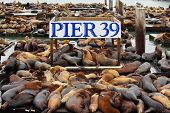 The well-known Pier 39 in San Francisco with sea lions. Animals are heated on wooden platforms poster