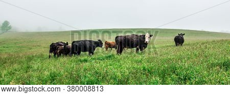 Cow Farm Field In The Smoky Mountains Of North Carolina