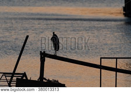 Silhouette Of A Great Blue Heron Standing On A Metal Rail Overlooking The Water As The Sun Rises In