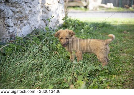Close Up On Cute Brown Mixed Breed Dog On Grass