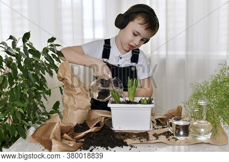 The Child In The Headphones In Planting The Flowers Of Hyacinths, Pours Water From The Jug, Water Po