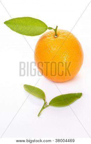Fresh Orange With Green Leaf